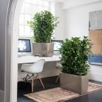 Stilingas augalų vazonas Lechuza Cararo 3