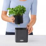Vazonas augalams Lechuza Cube Color 2