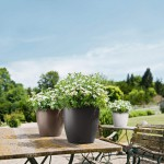 Spalvotas vazonas augalams Lechuza Classico Color 4