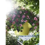 Prieskonių gėlių vazonas Lechuza Cascadino 6
