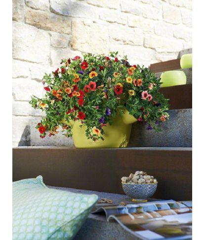 Stilingas augalų vazonas Cascadino Color 6