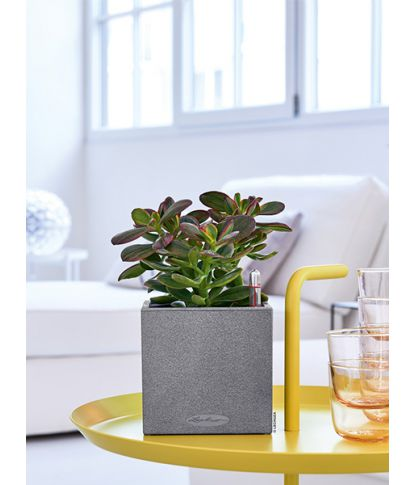 Lechuza augalų vazonas Canto Stone 14 4
