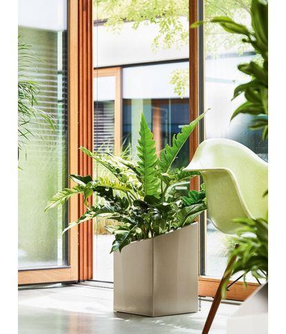 Vazonas augalams Lechuza Cursivo 1