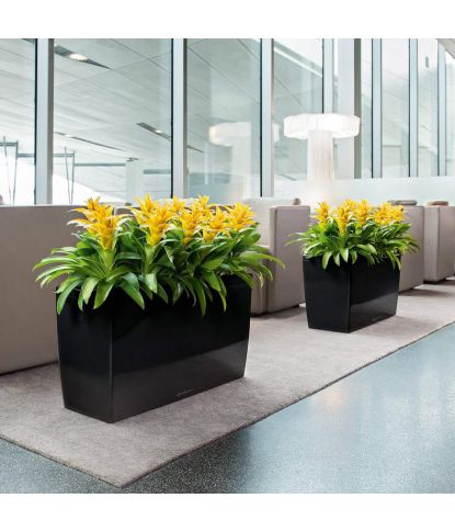 Stilingas augalų vazonas Lechuza Cararo 4