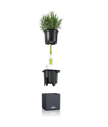 Vazonas augalams Lechuza Cube Color 3
