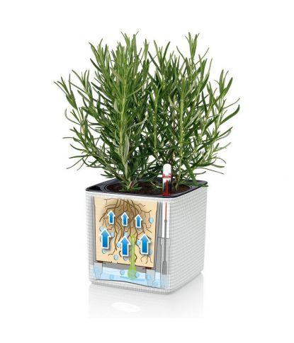Vazonas augalams Lechuza Cube Color 5
