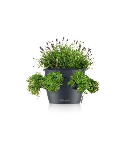Prieskonių gėlių vazonas Lechuza Cascadino 5