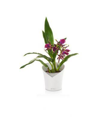Stilingas plastikinis vazonas orchidėjoms Lechuza Orchidea