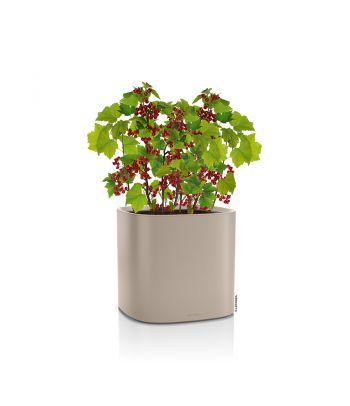 Stilingas augalų vazonas Lechuza Pila