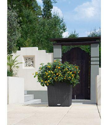Stilingas augalų vazonas Lechuza Cube Cottage 40