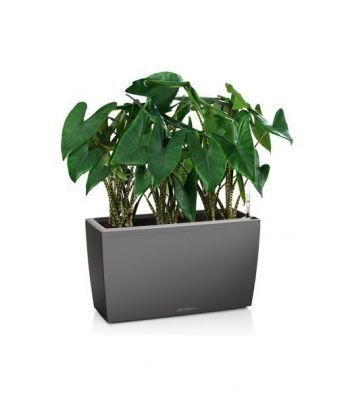 Stilingas augalų vazonas Lechuza Cararo
