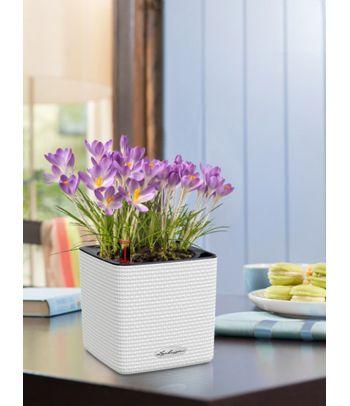Vazonas augalams Lechuza Cube Color