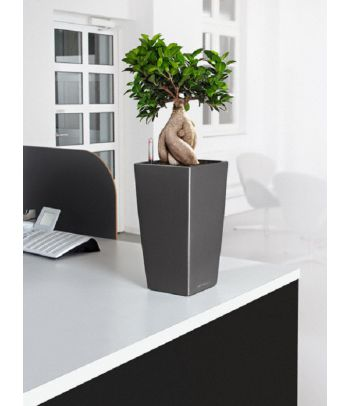 Stilingas plastikinis vazonas gėlėms Lechuza Cubico 22