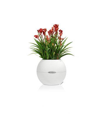 Plastikinis gėlių vazonas Lechuza Puro 20
