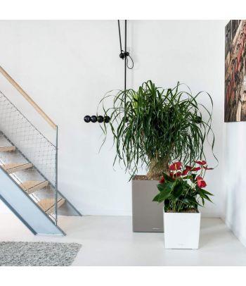 Stilingas gėlių vazonas Lechuza Cube