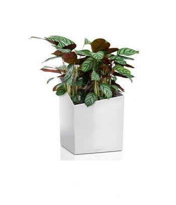 Vazonas augalams Lechuza Cursivo