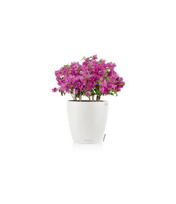 Spalvotas vazonas augalams Lechuza Classico Color