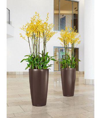 Elegantiškas augalų vazonas Lechuza Rondo