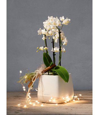 Plastikinis gėlių vazonėlis Lechuza Yula