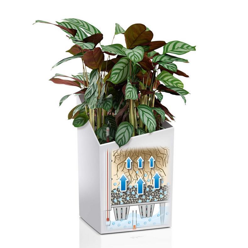 Vazonas augalams Lechuza Cursivo 3